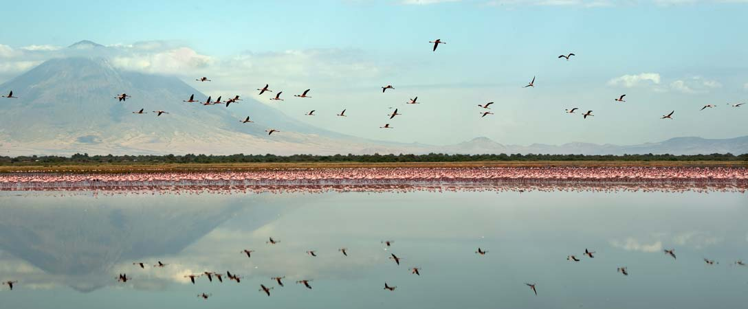 Colony of flamingos with mountains on the back by Staajabu Travel