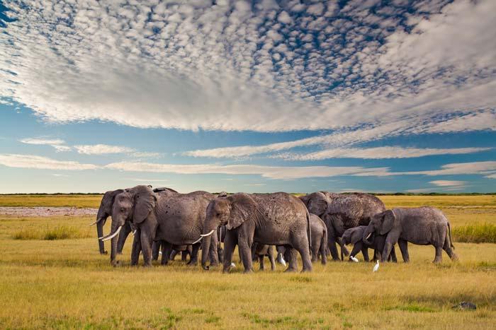 3 Days Adventure safari to Tarangire, Lake Manyara and Ngorongoro crater